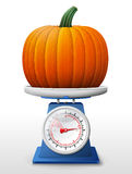 Pumpkin fruit on scale pan Royalty Free Stock Image