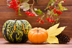 Pumpkin fruits as decoration Royalty Free Stock Photography