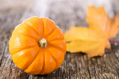 Pumpkin fruits as decoration and background Royalty Free Stock Photography