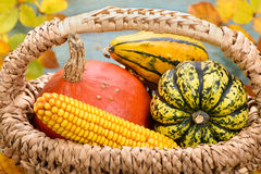 Pumpkin fruits as decoration at fall Stock Photos