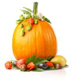 Pumpkin with fruits and flower Stock Photography