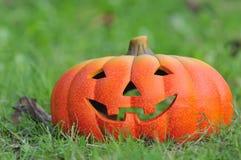 Pumpkin in the garden. Stock Photography