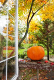 Pumpkin in garden Stock Photography