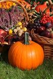 Pumpkin in the garden Stock Photo