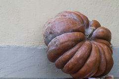 Pumpkin in the garden Royalty Free Stock Photography