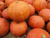 Pumpkin in the garden Stock Photography