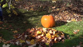 Pumpkin garden leaf fall stock video