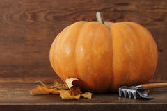 Pumpkin with garden tools Stock Images