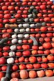 Pumpkin Gekko. A gekko made of pumpkins stock photography