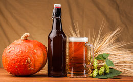 Pumpkin ,Glass of light beer and spikes of barley Stock Photos