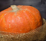 PUMPKIN IN GOLDEN NET Stock Photography