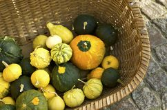 Pumpkin and gourd stock photo