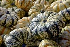 Pumpkin, Gourd, Autumn