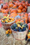 Pumpkin gourd Stock Image