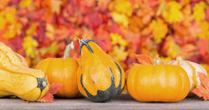 Pumpkin and Gourd Decoration Royalty Free Stock Images