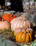 Pumpkin and gourd display along a stone wall Stock Image