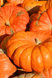 A pumpkin Stock Images