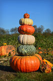 Pumpkin Gourd Tower Royalty Free Stock Photos