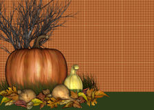 Pumpkin & Gourds Background Royalty Free Stock Images