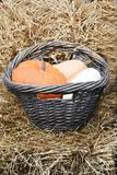 Pumpkin and gourds in basket Royalty Free Stock Photography