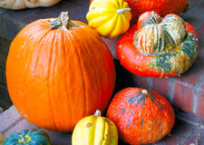 Pumpkin and Gourds. Bright orange pumpkin and colorful gourds on a brick front porch Royalty Free Stock Photography