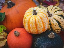 Pumpkin and gourds, a colorful Autumn selection royalty free stock image