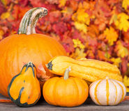 Pumpkin and Gourds Royalty Free Stock Photo