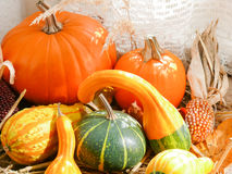 Pumpkin, Gourds and Corn in Window II Royalty Free Stock Photo