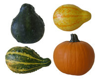 Pumpkin and gourds isolated on white Royalty Free Stock Images