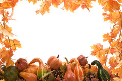 Pumpkin and gourds with leaves Royalty Free Stock Image