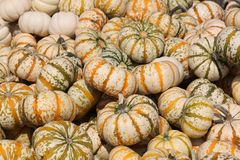 Pumpkin gourds. Mainly white, with green and orange accents Stock Photo