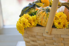Pumpkin gourds and mums in basket copy space Stock Photos