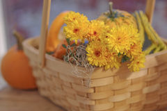 Pumpkin gourds and mums in basket selective DOF. Bright orange pumpkin, gourds, and yellow mums in basket on old wood table by window selective DOF selective royalty free stock image