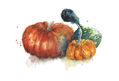 Pumpkin and gourds watercolor painting isolated on white Stock Image