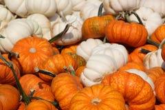 Pumpkin gourds. White and orange pumpkin gourds Royalty Free Stock Photos