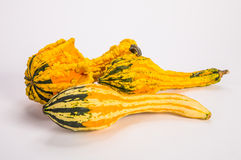Pumpkin and gourds Stock Photos
