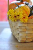 Pumpkin, gourds and yellow mums in basket. Bright pumpkin, gourds, and yellow mums in basket on old wood farm table selective DOF for Halloween Thanksgiving stock image