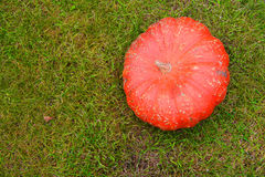 Pumpkin on grass Stock Photo