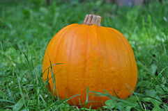 Pumpkin in the grass Stock Photo