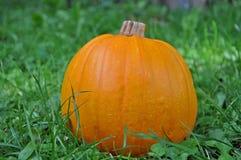 Pumpkin in the grass. Bright orange pumpkin in the grass stock photo