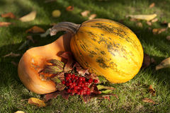 Pumpkin on grass Royalty Free Stock Photography
