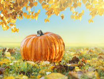 Pumpkin in grass with autumn foliage Royalty Free Stock Photo