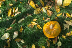 Pumpkin on grass and autumn leaves Stock Photos