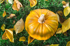 Pumpkin on grass and autumn leaves Stock Images