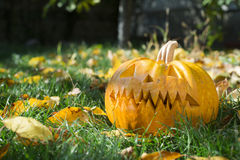 Pumpkin on grass and autumn leaves Royalty Free Stock Image