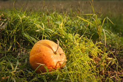 Pumpkin in the grass Stock Image