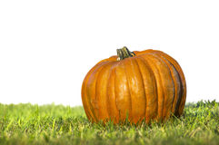 Pumpkin on grass, isolated on white Stock Photo