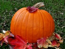 Pumpkin in grass with leaves Stock Image