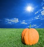 Pumpkin in a green grass Stock Images