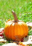 Pumpkin on green grass with autumnal leaves Royalty Free Stock Photo